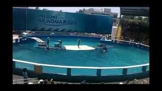 Miami Seaquarium Killer Whale and Dolphin Show
