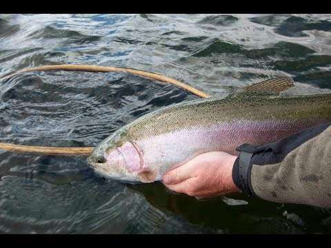 Bow River Trout On Hoppers & Droppers