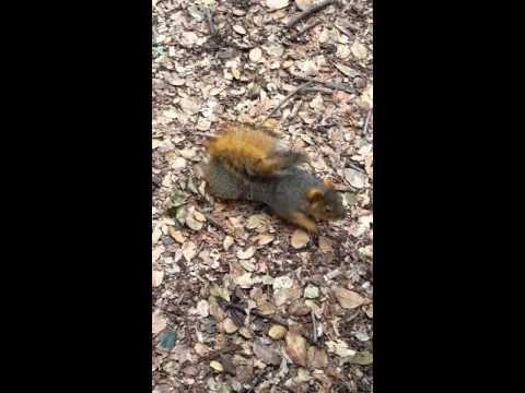 Cute squirrel in Berkeley Campus