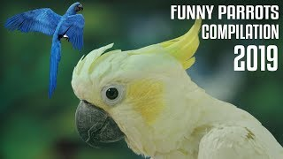 Funny Parrots Videos Compilation Cute Moment of the Animals - Cute Parrots #2