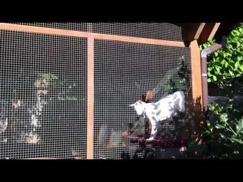 Catio: A cat patio