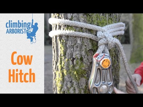 How To Tie A Cow Hitch | Arborist Knot Tying For Rigging