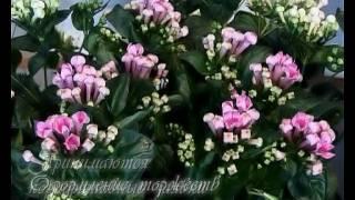 Дизайн-салон цветов «Элита флора» .avi(Элита Флора Шымкент, Event-альянс «Мейрам», 2011-09-06T12:24:45.000Z)