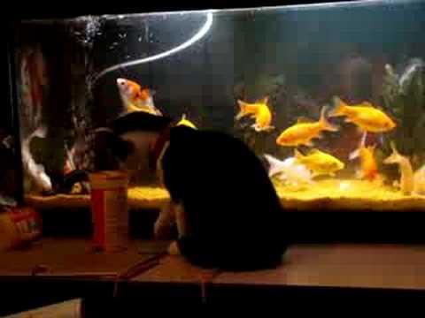 tipex joue avec les poissons