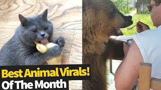 Top 40 Viral Animal Videos Of the Month  June 2019