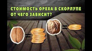 От чего зависит стоимость грецкого ореха? cмотреть видео онлайн бесплатно в высоком качестве - HDVIDEO