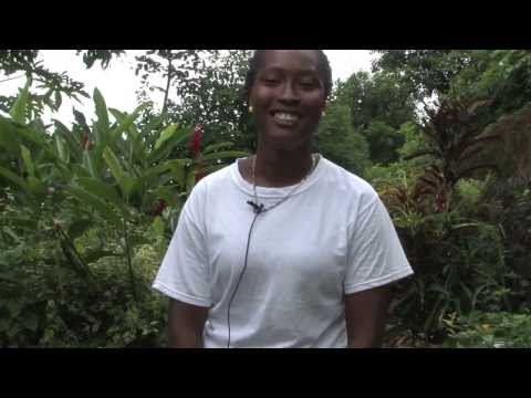 Smallhold farmers in Grenada look to a brighter future