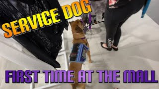 Service Dog In Training First Mall Trip