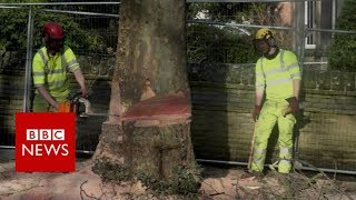 The city at war over its trees - BBC News