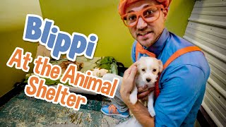 Caring After Pets with Blippi   Explore with BLIPPI!!!   Educational Videos for Toddlers