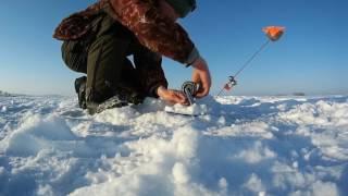 Ловля щуки, окуня и судака зимой на жерлицы