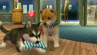 Repeat youtube video Nintendogs : Playthrough (Part 3)