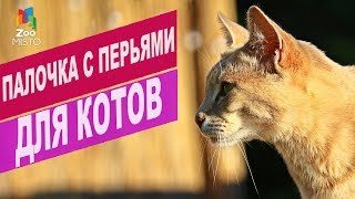 Палочка с перьями для кошек Природа   Обзор палочка с перьями для кошек Природа