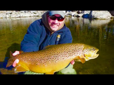 Fly fishing for colorado 39 s butter ball brown trout aka for Trout fishing colorado
