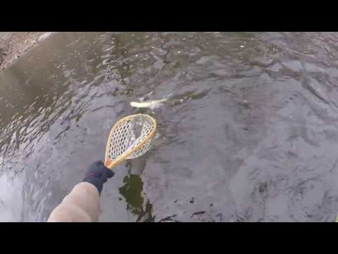 """New Flyrod Review, SAGE X, 10ft 5wt., """"SWEET!!"""""""