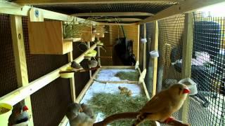 Finch Aviary Cam!