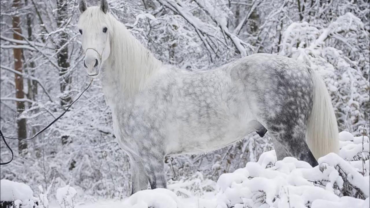 Resultado de imagen para caballos hermosos del mundo