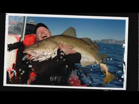 NORWAY COD FISHING - HALIBUT -COAL FISH -WOLF FISH -LING - DREAM FISHING ADVENTURE HOLIDAYS