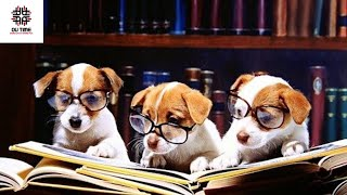 What is the Best Dog Breeds For College Students