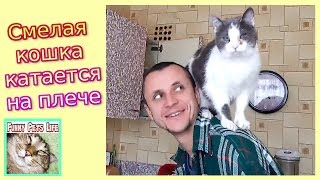 Кошка сидит на плече. Дрессировка кошки. Умная кошка слушается хозяина.