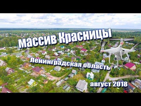 Небольшой обзор Массив Красницы Ленинградская область Гатчинский район. Съемка с высоты Phantom 4