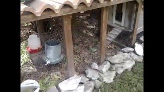 How I keep my chicken coop and run clean and smelling fresh for free with very little effort