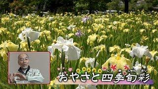Episode7「花ショウブ」