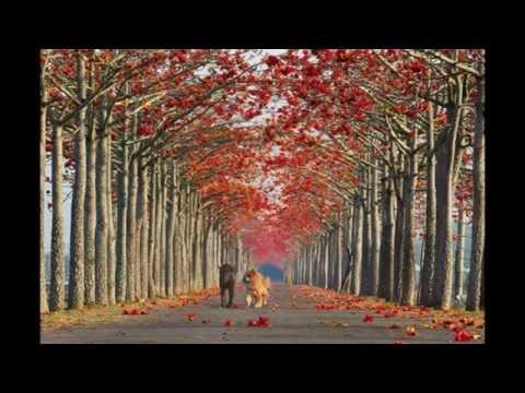 สวยงามตระการตา!!!!ภาพต้นไม้สวยๆแปลกๆ