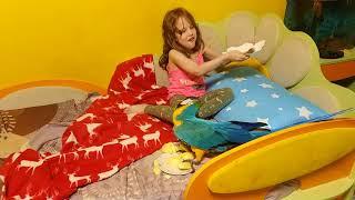Попугай ара пытается украсть сосиску