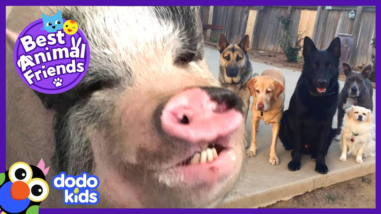 Pig Learns How To Photobomb His Dog Family | Animal Videos for Kids | Dodo Kids