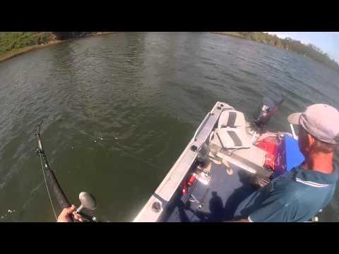 Manning River Bull Shark
