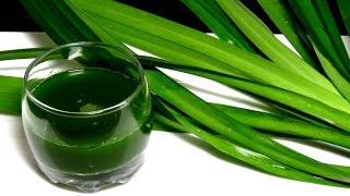 Натуральный Зеленый ПИЩЕВОЙ краситель из листьев пандана - natural food coloring pandan leaf perth