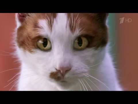 Гугл реклама с котом интернет-магазин кресло-груша реклама и описание