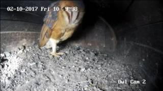 Dirt University - Owl Cam, Live Stream thumbnail