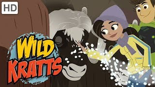 Wild Kratts 🧊🌡️ Staying Warm in the Ice and Cold ❄ Happy Holidays! ❄ Kids Videos