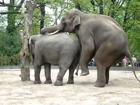 elephant-massaging-woman-naked-two-girls-having-sex-video