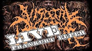 Visceral Disgorge - Frankfurt Elfer - 21.02.2016 - Dani Zed - Death Metal Kraanium Disentomb