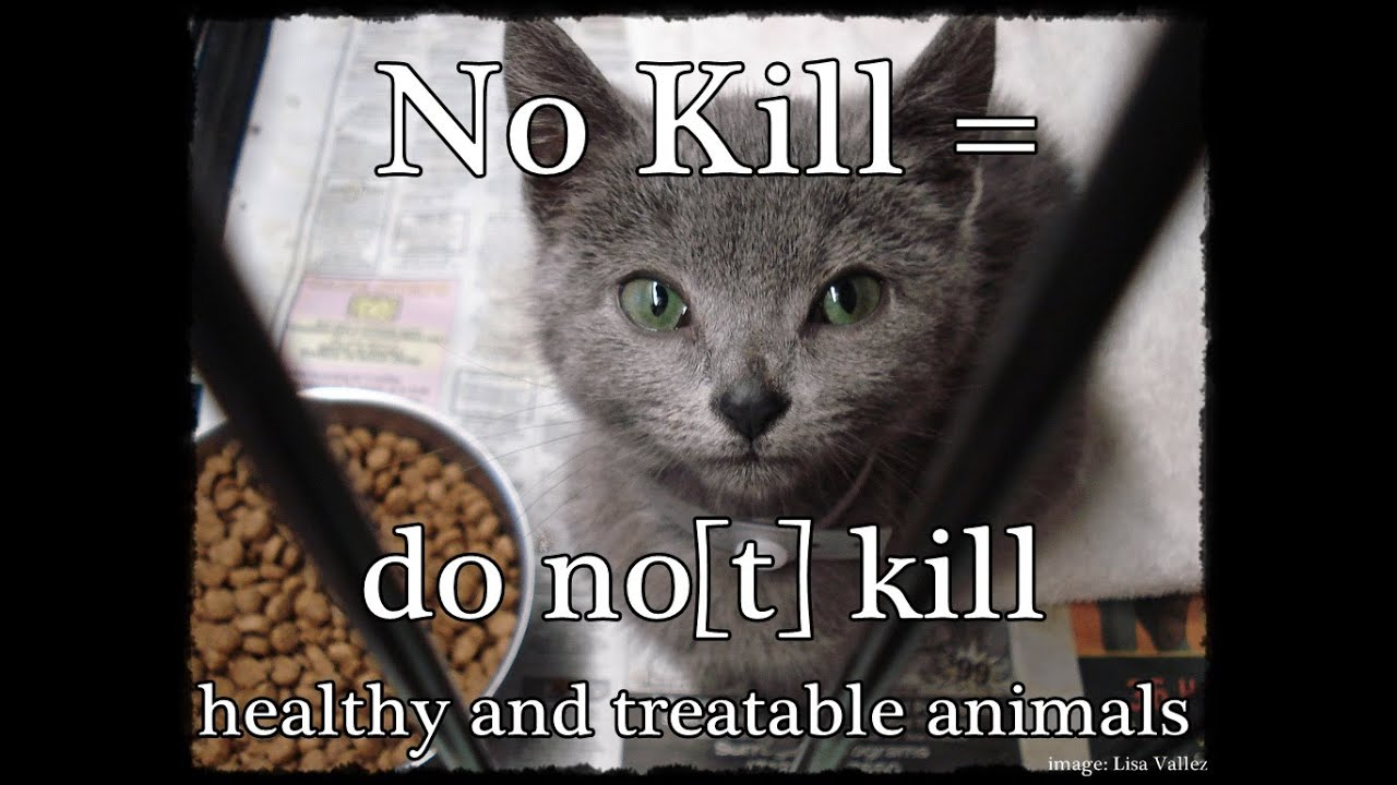 "No Kill in Motion: Use the Phrase ""No Kill"""