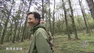 [远方的家]世界遗产在中国 认识高原白马鸡| CCTV中文国际