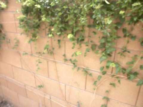 Wireless Radiation Appears to be Retarding my Climbing Plants