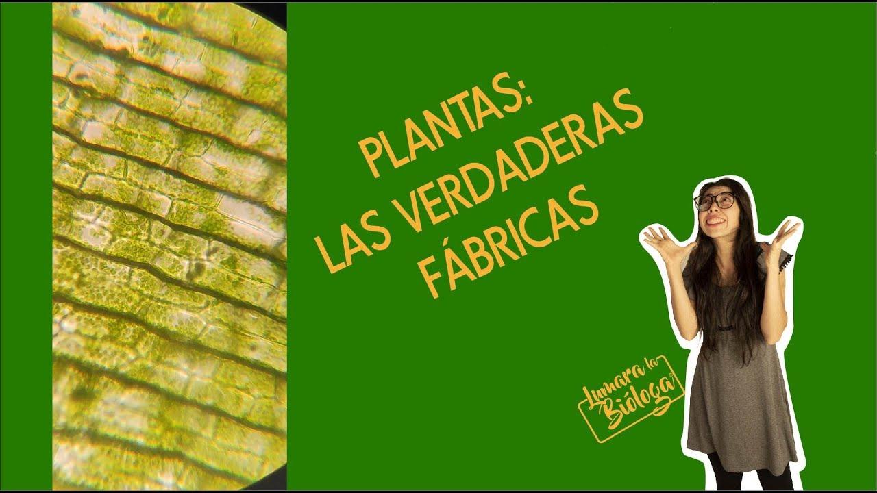El super poder de las plantas: la fotosíntesis