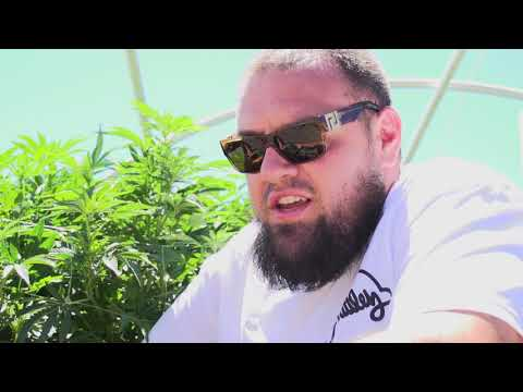 Big Rootz Soil - TerpHogz - Zkittlez Greener Fieldz