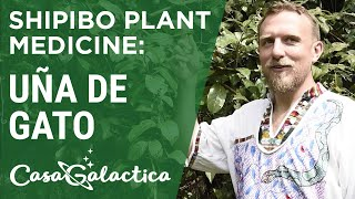 Shipibo Plant Medicine Uña de Gato - Ayahuasca Plant Spirit Healing Retreat Peru | Casa Galactica