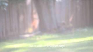 English Cocker Spaniel - Lucy