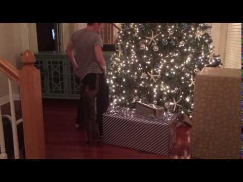 Savannah Cat Attack II