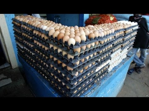 Angola Eggs: Plans To Destroy 11 Million Illegal Imports | Breaking News