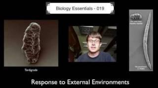 Response to External Environments