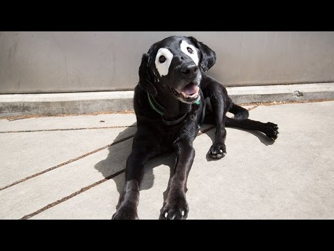 Dog With Vitiligo Becomes Face Of Kids Charity