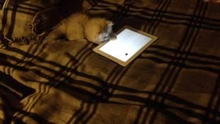 Игра для кошки на планшете (Ассолька)