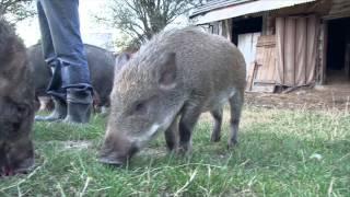 Zwierzęta dla dzieci - farma  Świniodzików- Baw się z nami